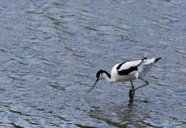 Birding for Beginners at Slimbridge Wetland Centre
