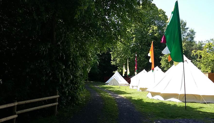 Brook Lodge Farm Camping tents