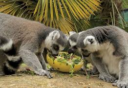 Junior keeper experience at Bristol Zoo Gardens