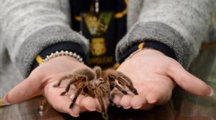 Creepy crawlies at Longleat