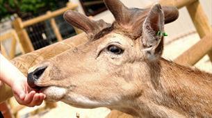 Deer feeding at Longleat
