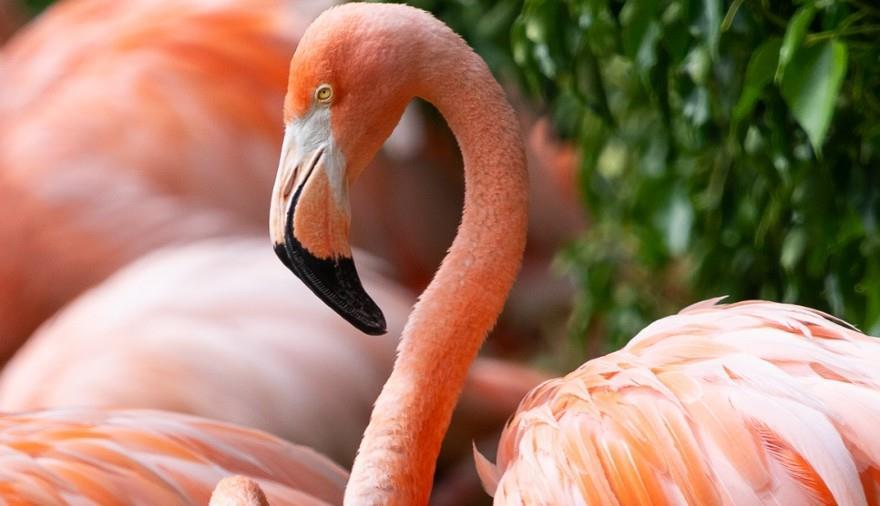 Dine with the Flamingos at WWT Slimbridge Wetland Centre