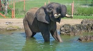 Elephants at Noah's Ark Zoo Farm Bristol