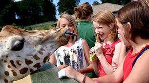 Feed the giraffes at Longleat