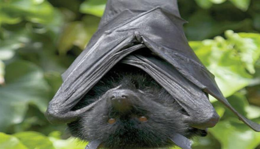 Fruit bats at Bristol Zoo Gardens