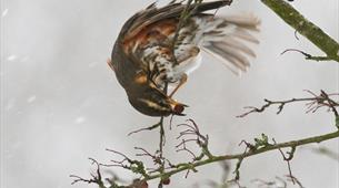 Identifying birds in autumn
