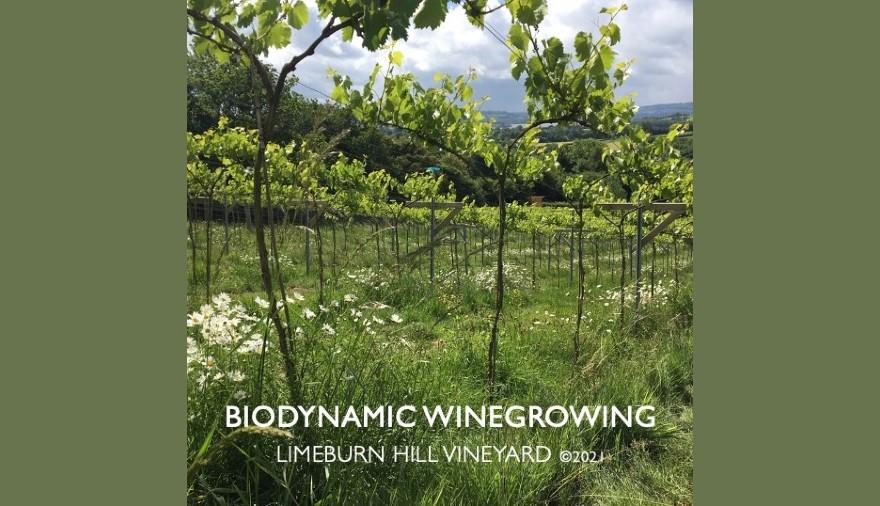 Introduction to Biodynamic Winegrowing Workshop at Limeburn Hill Biodynamic Vineyard