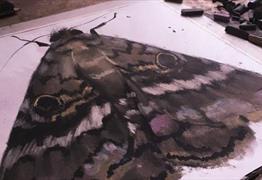 Junior Drawing School: Butterflies with RWA