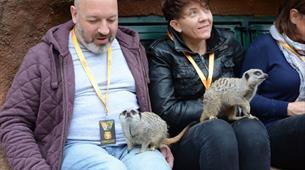 Meerkat experience at Longleat