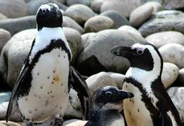 Meet the penguins at Bristol Zoo Gardens