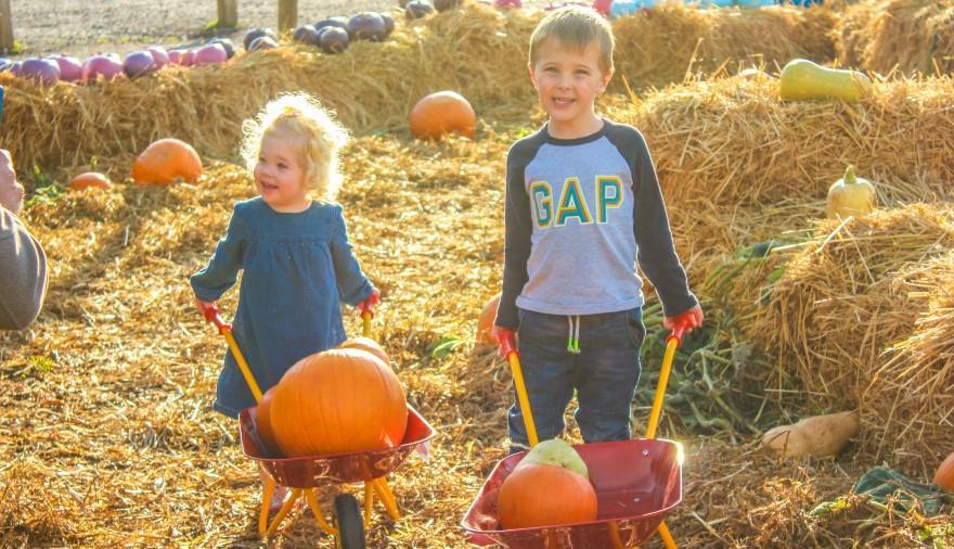 Pumpkin Fest at Noah's Ark Zoo Farm