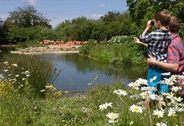 Child at WWT Slimbridge Wetland Centre