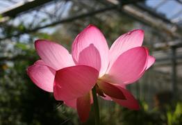 University of Bristol Botanical Garden flower