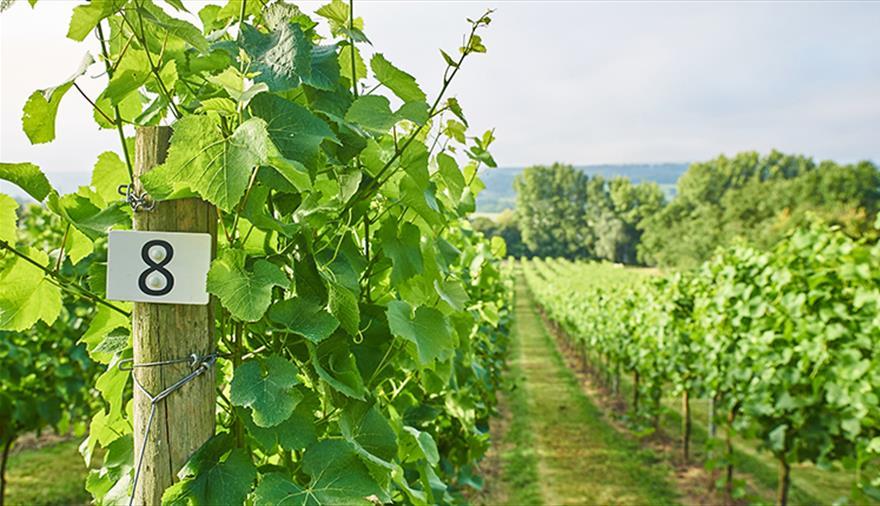 Aldwick Estate Vineyard Tours & Wine Tasting