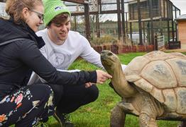 Tortoise at Noah's Ark Zoo Farm Bristol