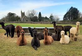 Wolfridge Alpaca Barn