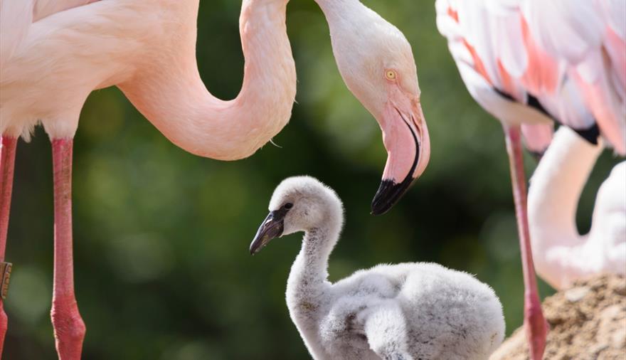WWT Slimbridge Wetland Centre Flamingos