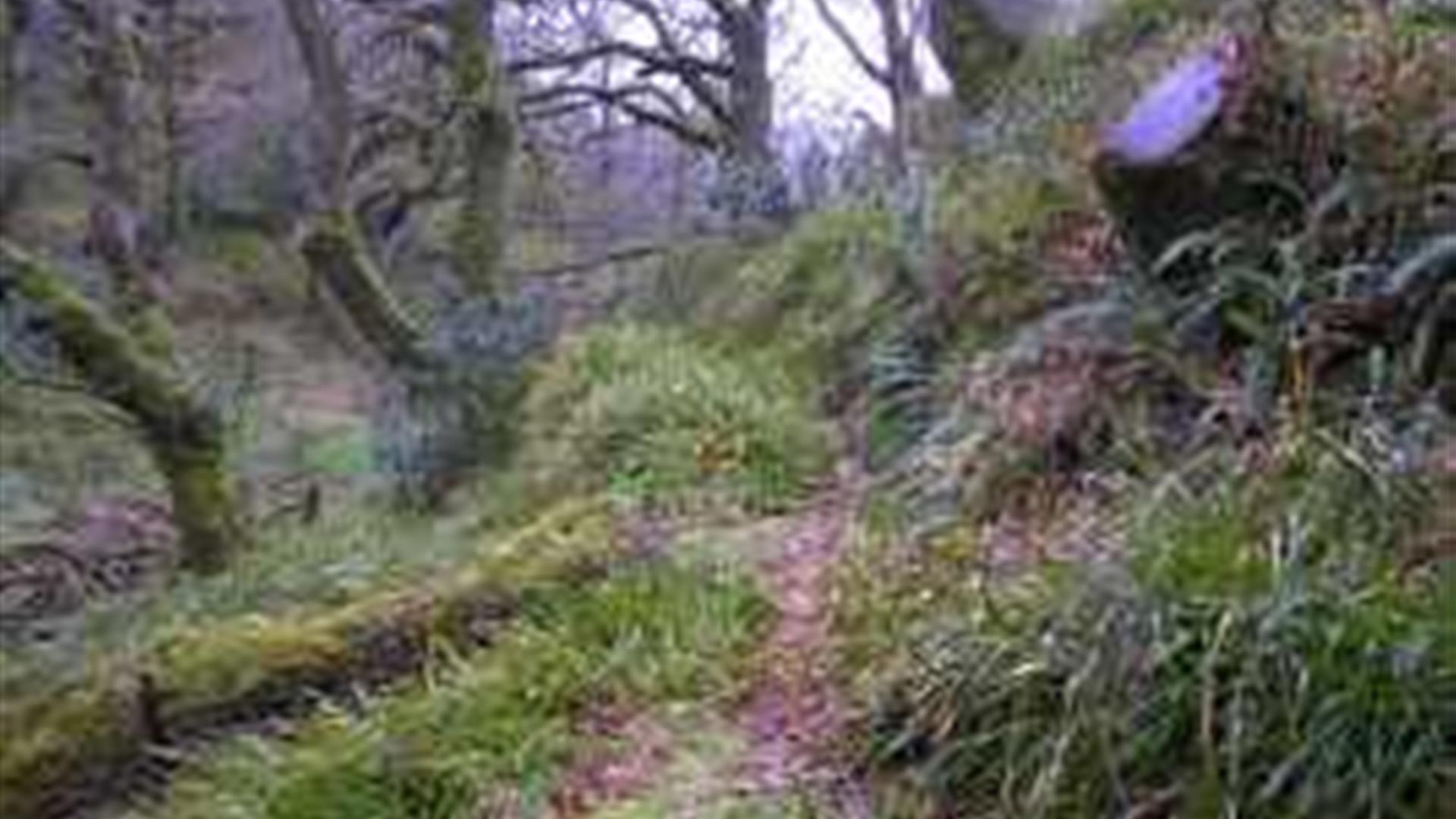 Breen Oakwood Nature Reserve