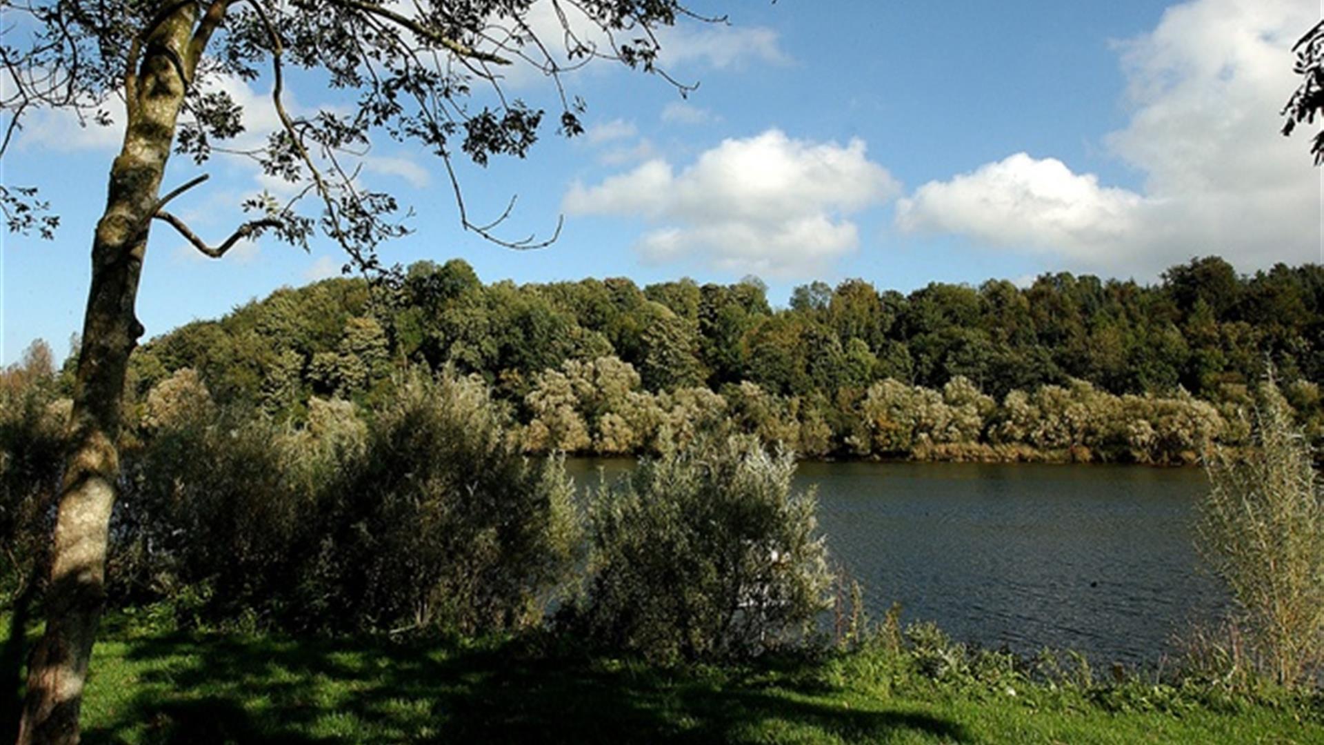 Mountsandel Wood