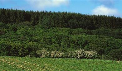 Altarichard Forest