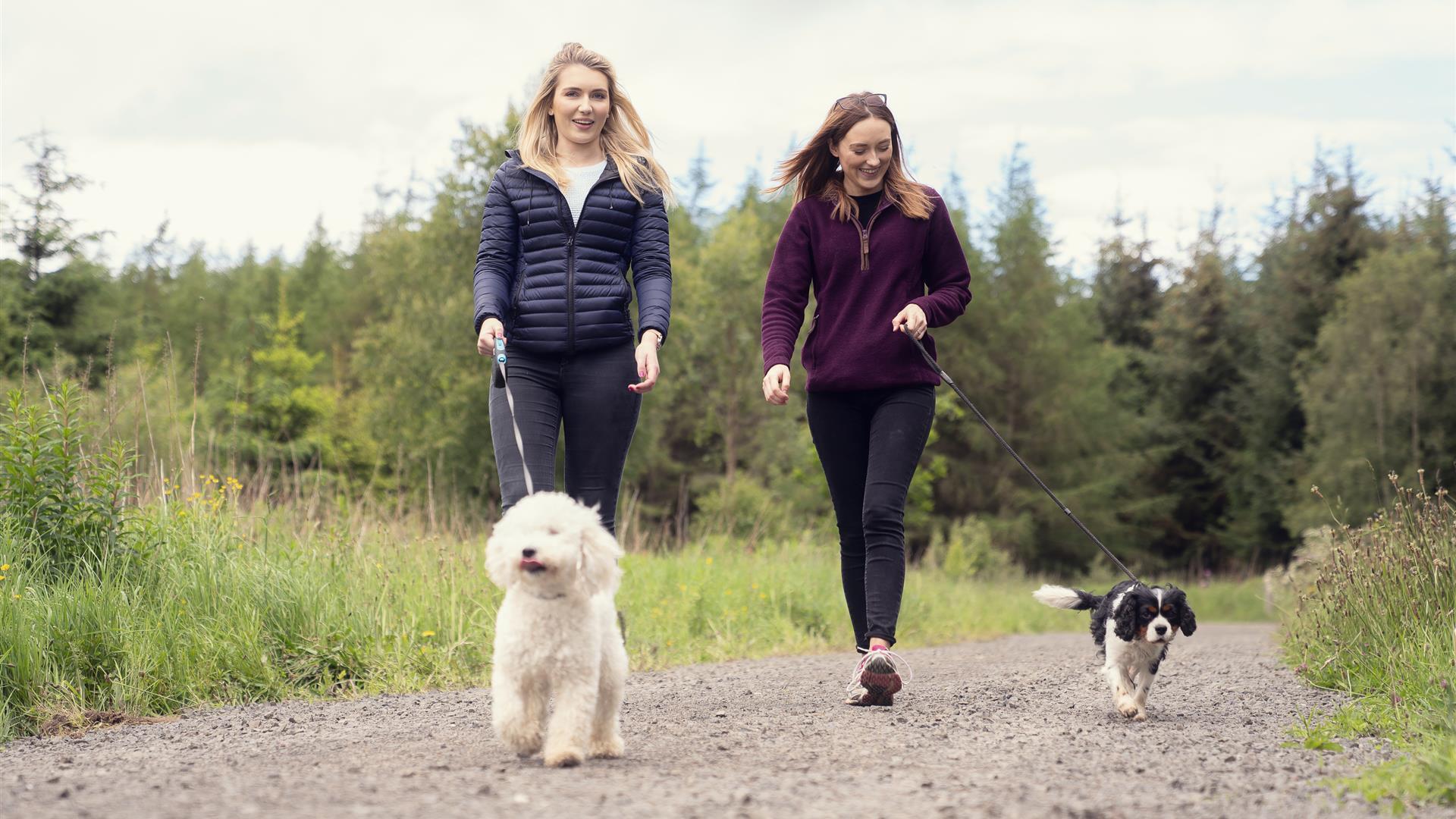 Garvagh Forest Walking Trails