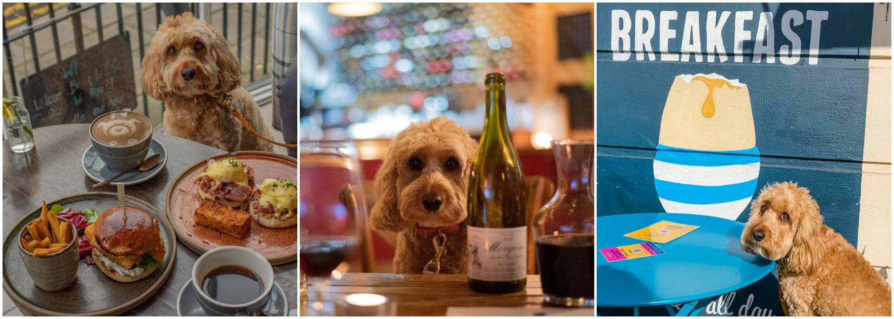 Dog friendly places to eat Cheltenham