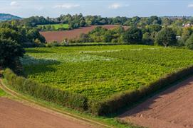 Astley Vineyard