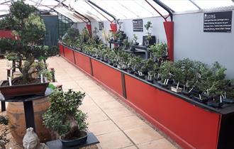 Bonsai World of Cheltenham