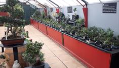 Bonsai World of Cheltenham