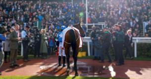 New Year's Day Racing at Cheltenham Racecourse