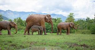 Elephant Family at Sudeley Castle
