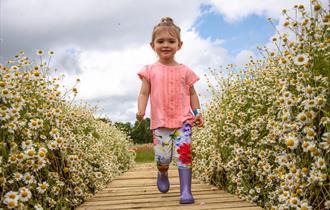 Flower Field at Cotswold Farm Park