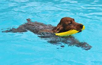 Sandford Park Lido Dog Swim