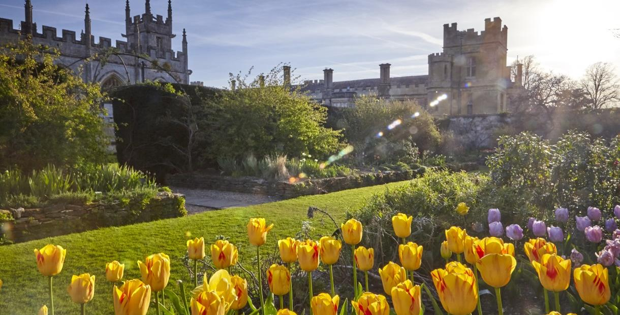Spring Tulips at Sudeley Castle