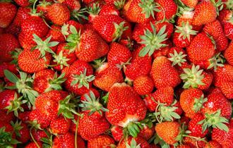 Pick your own fruit - Primrose Vale Farm Shop