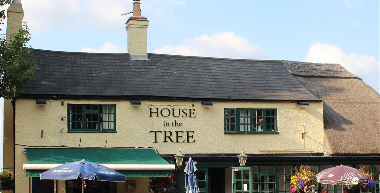 House in The Tree