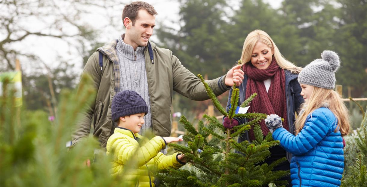 Pick Your Own Christmas Tree at The Bicycle Hub