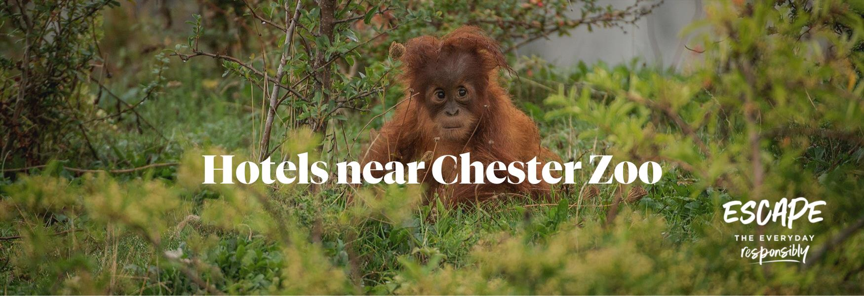 Hotels near Chester Zoo