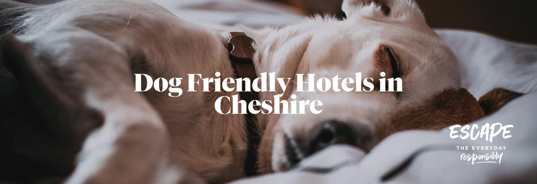 Dog Friendly hotels in Cheshire