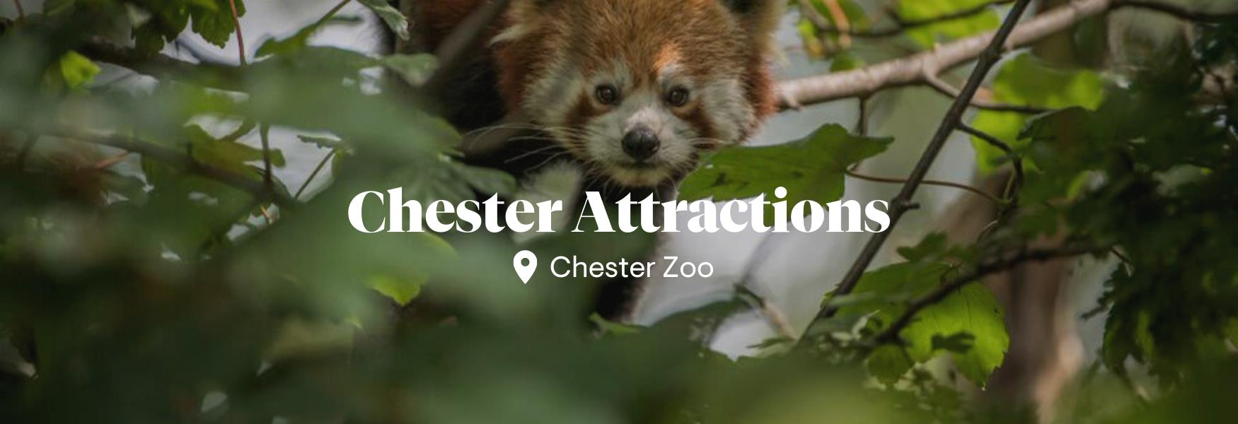 Reopening attractions in Chester