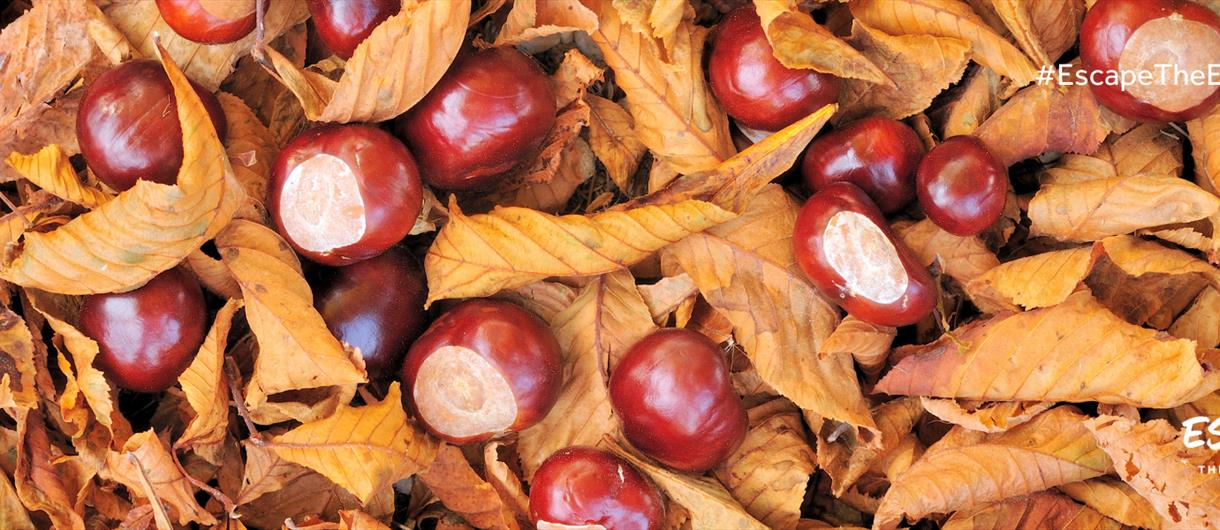Where to go Conker Picking in Cheshire this Autumn