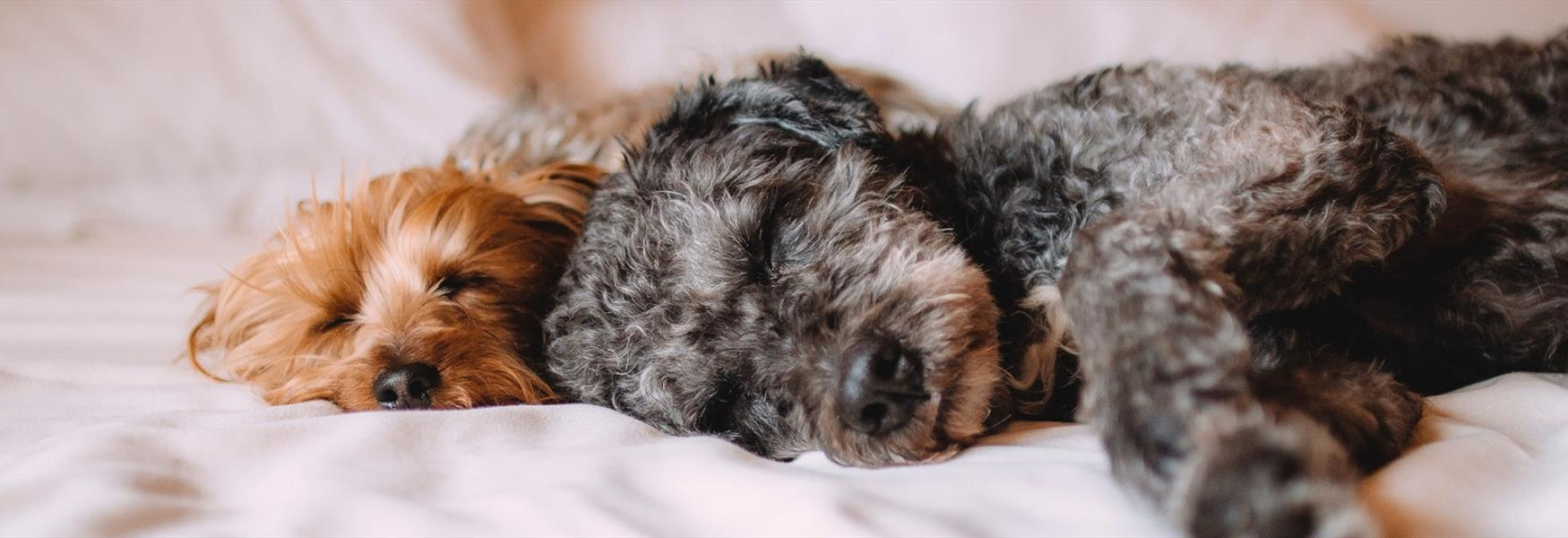 Dog Friendly Hotels in Chester