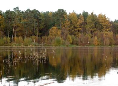 Tranquility at Delamere Forest