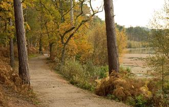 Explore Delamere Forest, Cheshire's largest area of woodland