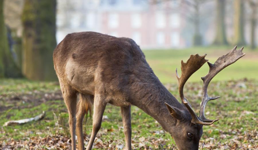 Dunham Massey's deer park covers an area of 192.7 acres
