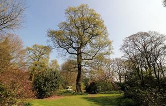 The Grove at Arley Hall. Photo credit: Jeff Buck