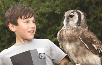 So many things to do and see at Blakemere Village including Falconry