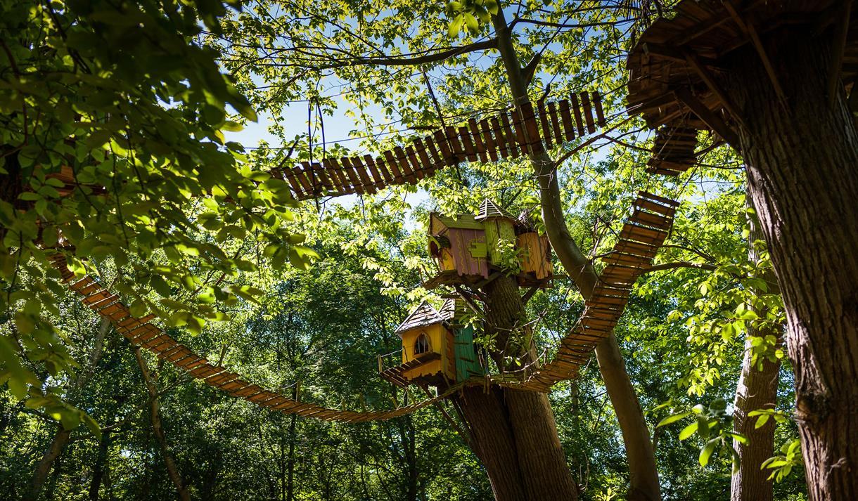Twiggles treetop walkways at BeWILDerwood