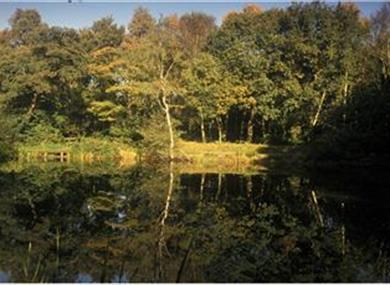 Big Wood, Runcorn