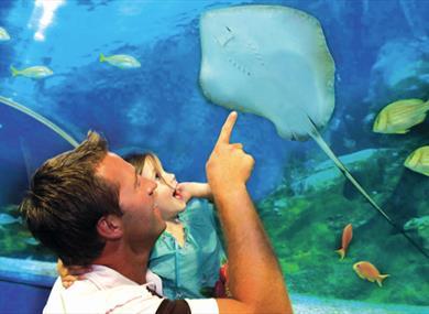Underwater tunnel at Blue Planet Aquarium
